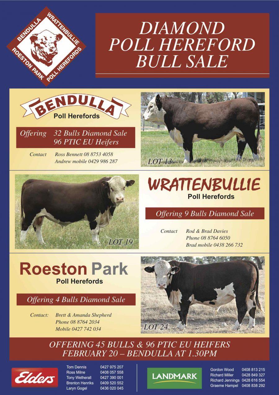2019 Diamond Bull Sale
